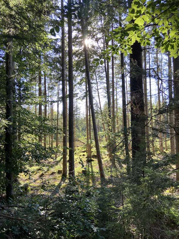 """Achtsamkeitswanderung """"Deine Wohlfühlzeit im Wald"""""""
