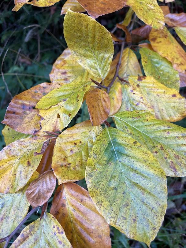 Herbstlicher Farbpracht - eine Wohltat für unsere Augen & Psyche