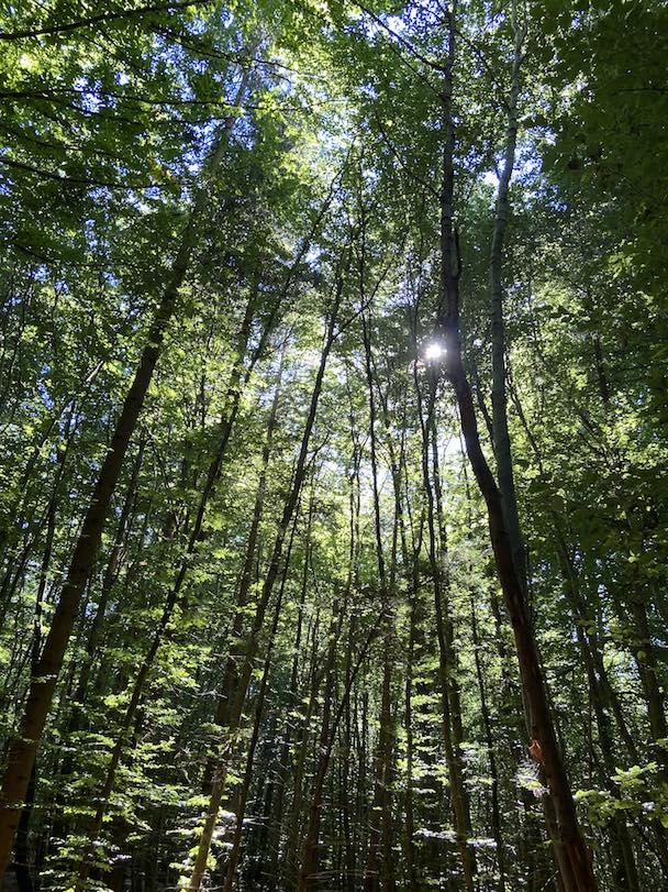 Umgeben vom Wald fühle ich mich wohl.