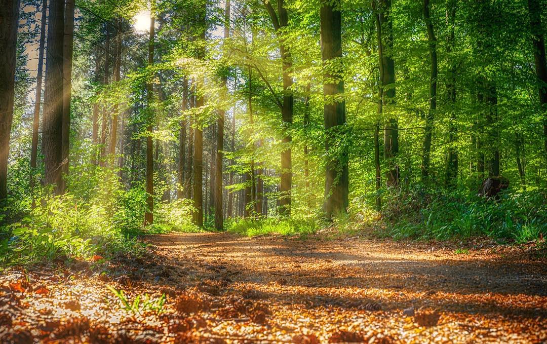 """Weiterbildung Onlinekurs """"Wald und Waldbaden als Gesundheitsbooster"""""""