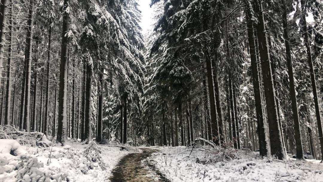 Waldbaden im Winter – 4 Gründe für den Nadelwald