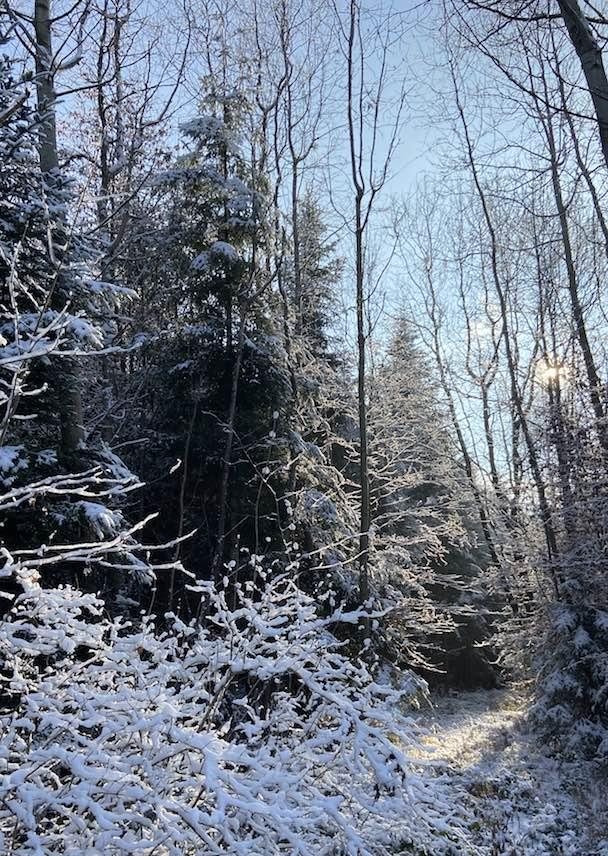 Blogartikel Waldbaden im Winter