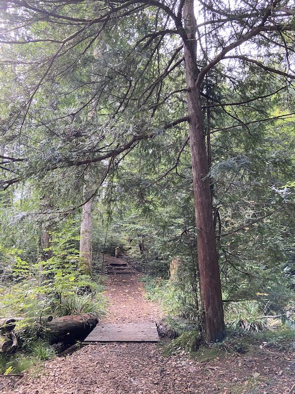 """Waldbaden Onlinekurs """"Zeit für dich Selbst"""" im Wald mit achtsame Walderlebnisse"""