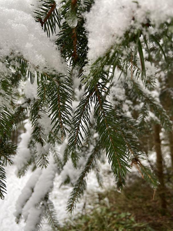 Blogartikel Waldbaden im Winter im Nadelwald