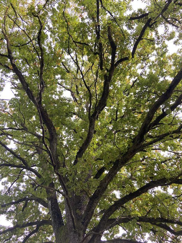 Baummeditation zur Entspannung von achtsame Walderlebnisse