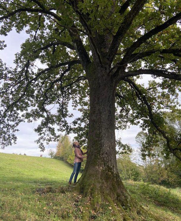 Baummeditation von achtsame Walderlebnisse