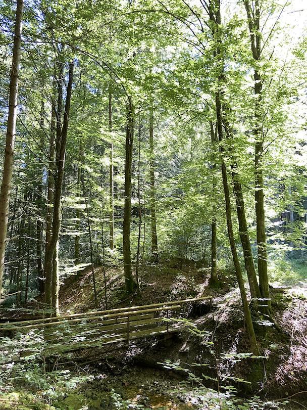 """Waldbaden Weiterbildung Onlinekurs """"Wald und Waldbaden als Gesundheitsbooster"""""""