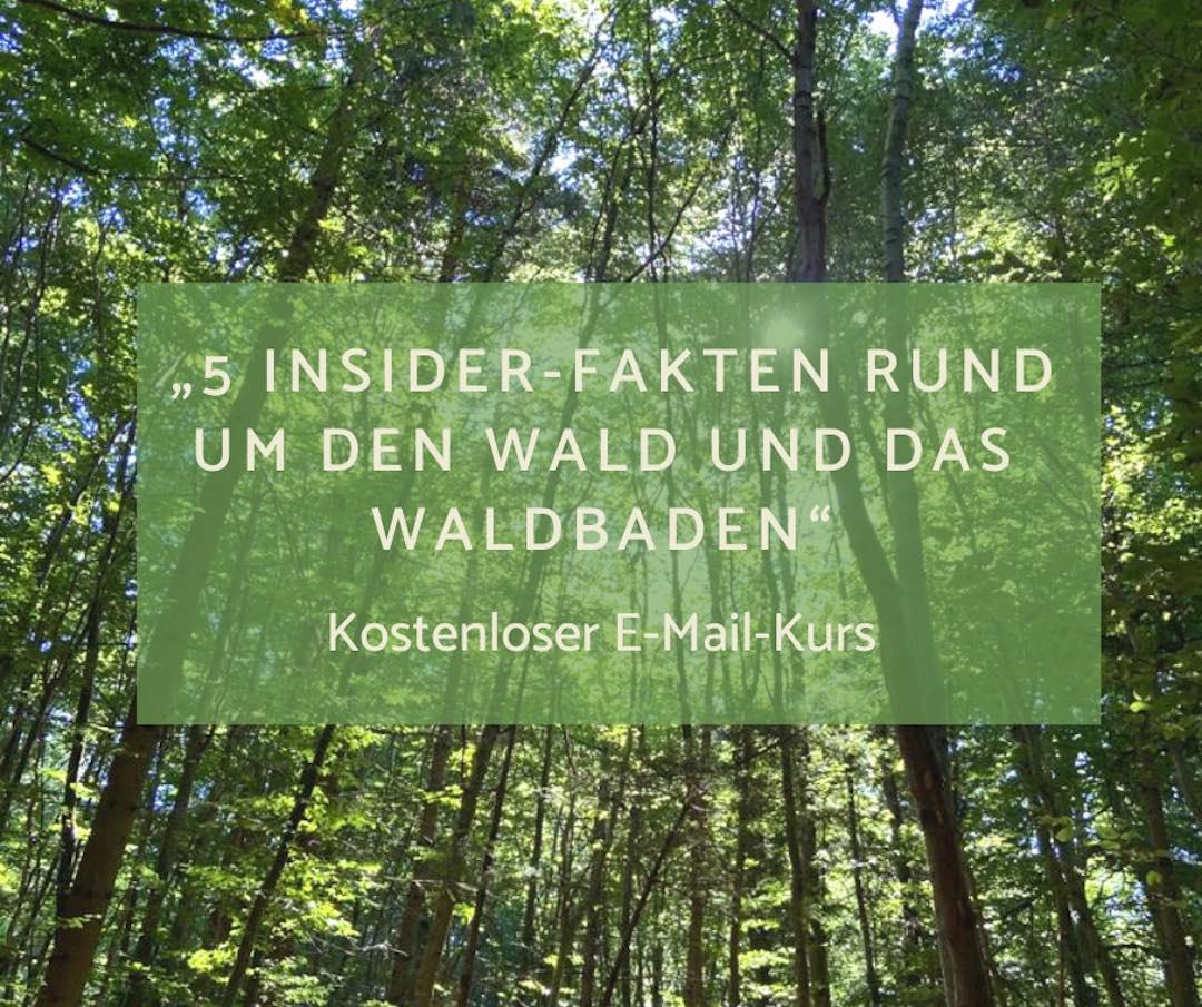 kostenloser E-Mail-Kurs - 5 Insider Fakten rund um den Wald und das Waldbaden