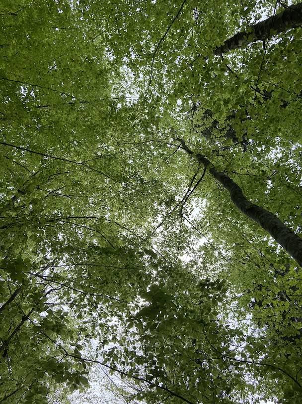 Waldbaden mit der Hängematte - der Blick in die Baumkronen